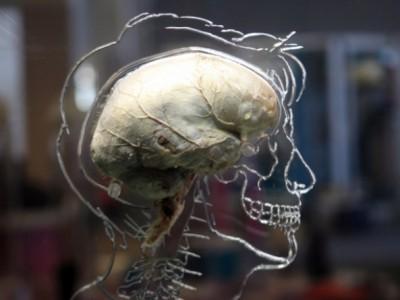 Cientistas inventam chip capaz de aprender como o cérebro humano